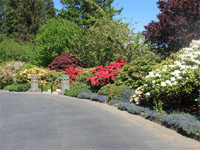 azalea park has some spectacular flower beds such as this one along a pathway